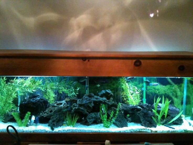 125 gallon tank fish tank ideas pinterest fish tanks for 125 gallon fish tank stand