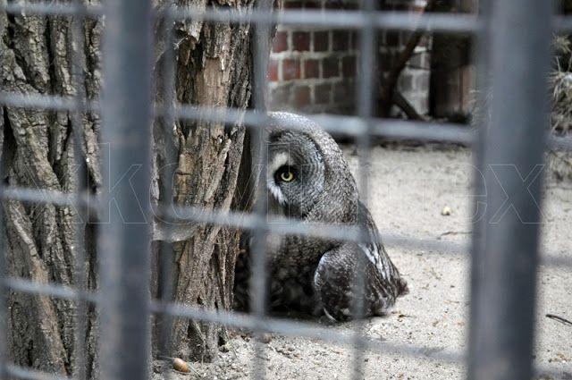 #zoo #wroclaw #polska #poland #owl #sowa