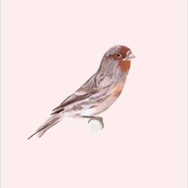 Emma Philip designer - BIRDS