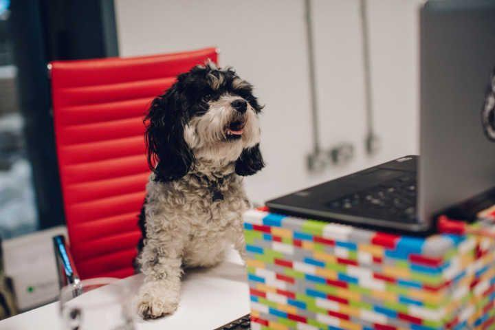Empresa dá uma semana de folga a funcionário que adotar animais