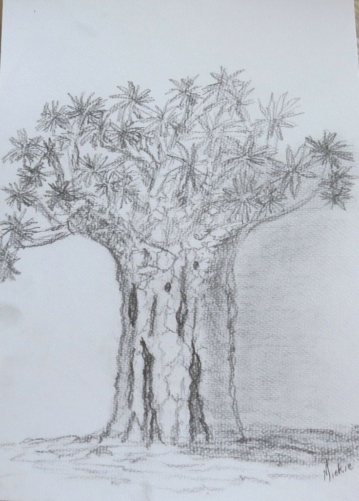 I drew this tree a couple of months ago when I was in the Northern Cape with a friend over a long weekend.  I was fascinated by its rugged beauty.  It seemed as if it tenaciously insisted on surviving its arid surroundings.  Pencil on paper.  A3 size.  R200