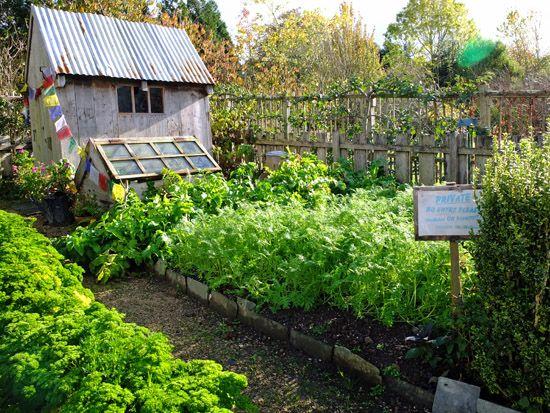 Mr MCGregor's Garden at RHS Rosemoor