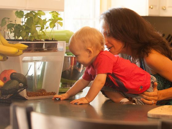 Home Aquaponics Kit: Self-Cleaning Fish Tank That Grows Food. Great gift for the family foodie!