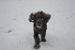Gårdstunet Hundepensjonat: Snø - snø - snø! Det gir lekne hunder på tunet!