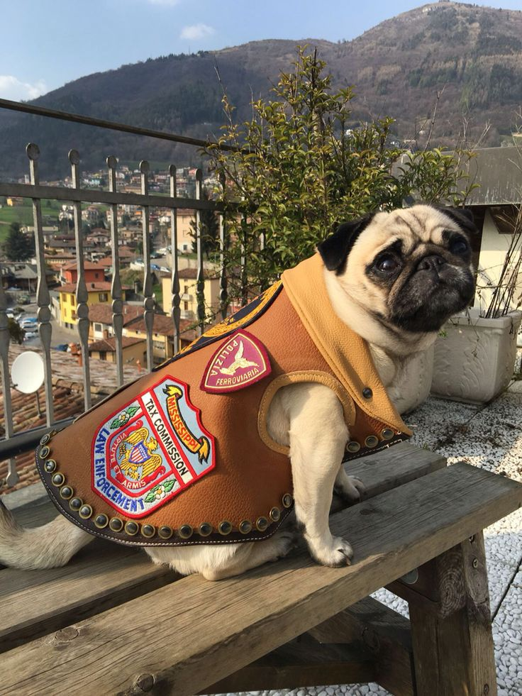 Luxury Pug's jacket 'Police'Collection Limited edition by CaveCanemItaly