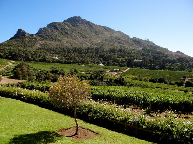 While your taste buds are satisfied by delicious wine, your eyes will be thrilled by the breath-taking views at the exquisite Constantia Glen Estate.
