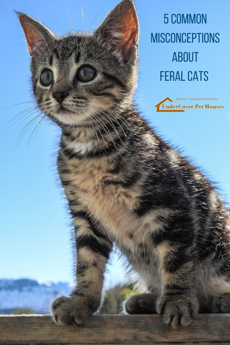 5 Common Misconceptions About Feral Cats
