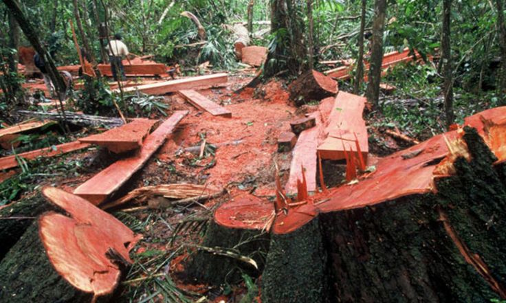Corte ilegal de troncos en bosques tropicales de tierras bajas. El lugar exacto de la imagen no está especificado.  Créditos: World Wildlife Fund:
