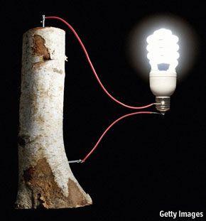 Wooden batteries | The Economist