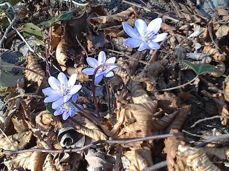 Erste Blumen im Frühling