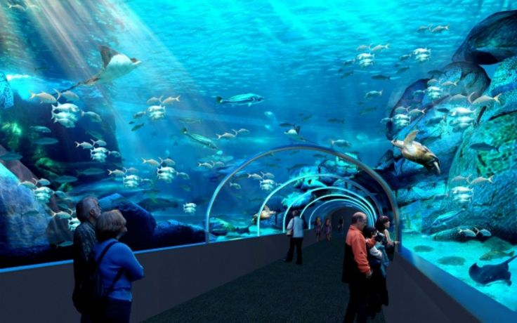 Sea Life London Aquarium - Fast Track Entry With Souvenir | http://ift.tt/2f5UZXJ #pin #deals #travel #traveldeals #tour #show #musicals #usa #unitedstates #orlando #lasvegas #newyork #LosAngeles #SanFrancisco #hawaii #Sea Life London Aquarium - Fast Track Entry With Souvenir