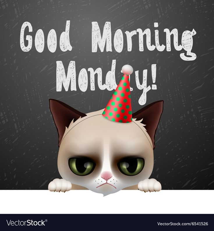 Grumpy Cat Vector Good Morning Monday Images Happy Tuesday Images Grumpy Cat