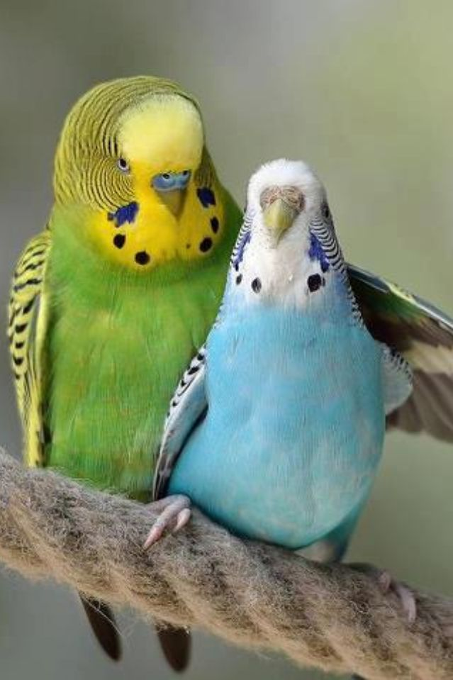 Cacauphony of melodious squawkers colorfully adorned in miracle of flight.