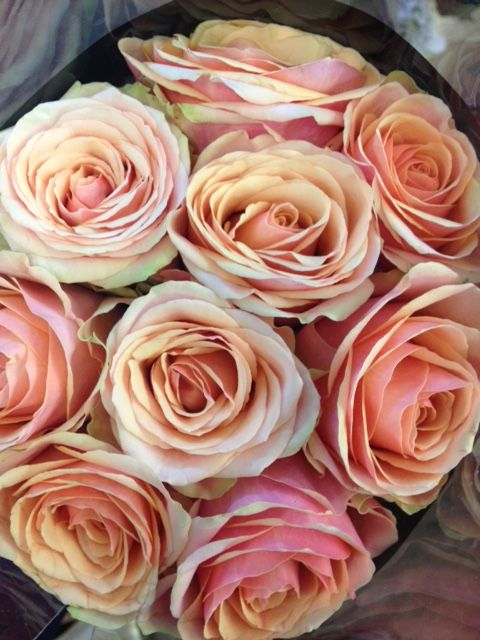 Rose 'Dividend'...Sold in bunches of 20 stems from the Flowermonger the wholesale floral home delivery service.