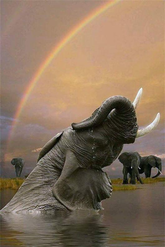elephant bathing under a rainbow