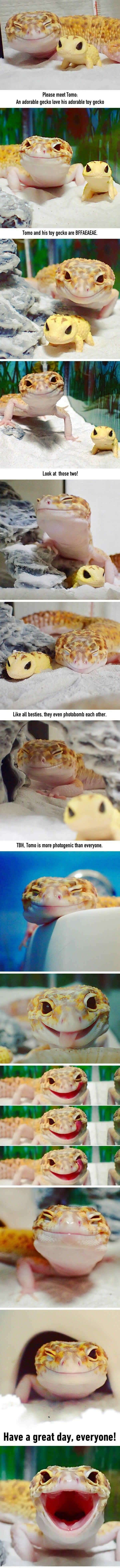 Tomo the happy gecko with his favorite toy gecko