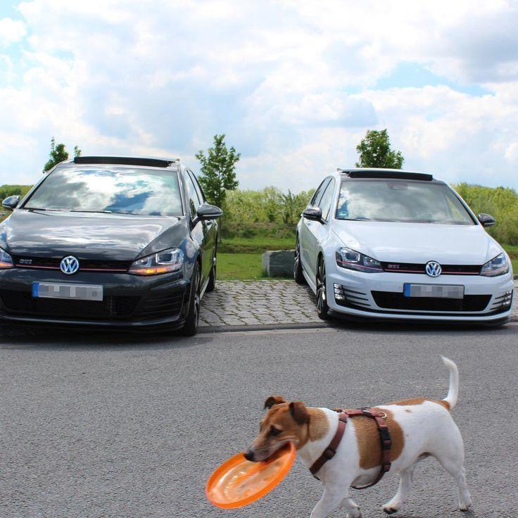 "99 Me gusta, 3 comentarios - Stefan (@stefan92) en Instagram: ""Eiskalt 😀 Photobomb 🐶 #VW #Volkswagen #Golf #Golf7 #GolfGTI #GTI #mk7 #performance #dsg #white…"""