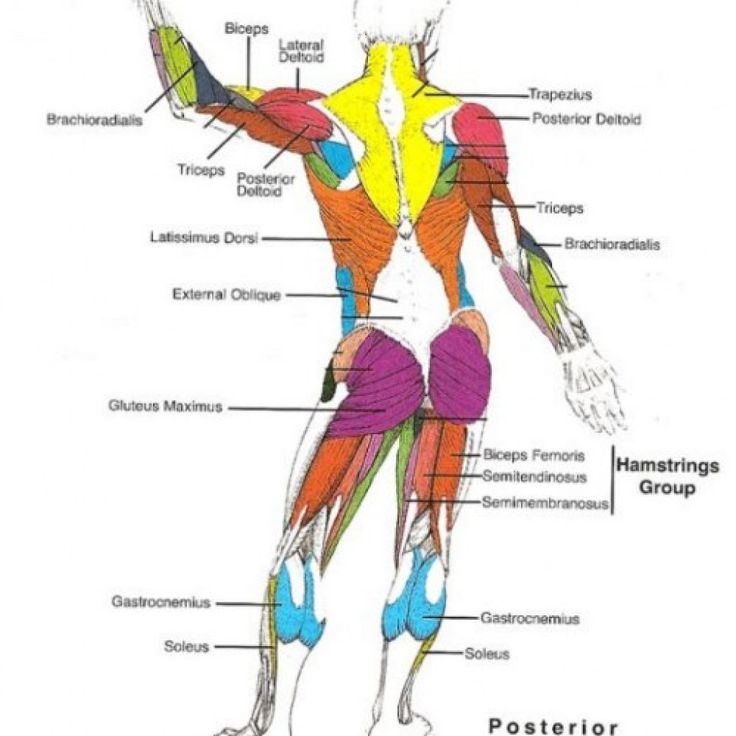 whole leg diagram waxing leg diagram