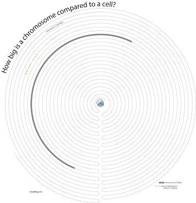How Big is Chromosome 1?himelblog: Human Chromosome vs