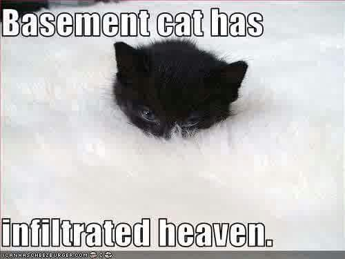 Page 10 of Basement Cat Vs Ceiling Cat Post edited by KittenMittens at  sc 1 st  Pinterest & The 59 best Basement Cat vs Ceiling Cat images on Pinterest ...