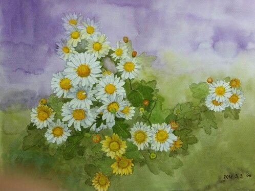 국화   watercolor