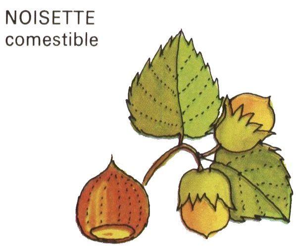 R sultat de recherche d 39 images pour noisette dessin - Noisette dessin ...
