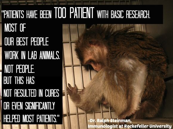 Expert Quotes Prove That Animal Testing Is Wrong Peta And Animal