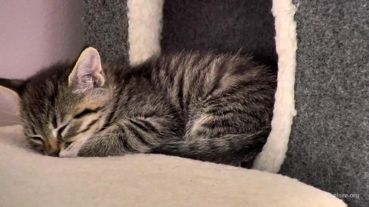 I'm watching #kittenrescuecam on @exploreorg, streaming live from @KittenRescue in Los Angeles: