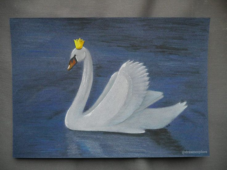 Swan Lake – Draw N Explore