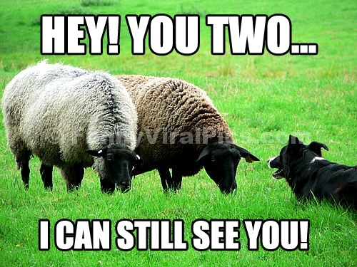 Funny Black Sheep Meme : Sheep quotes brainyquote