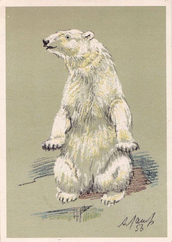 A. Laptev Polar Bear Postcard  1956 Soviet by RussianSoulVintage