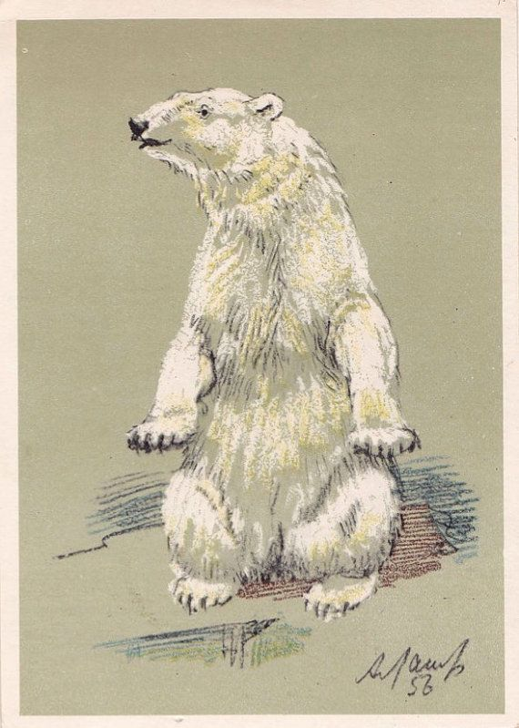 A. Laptev Polar Bear Postcard  1956 Soviet by RussianSoulVintage