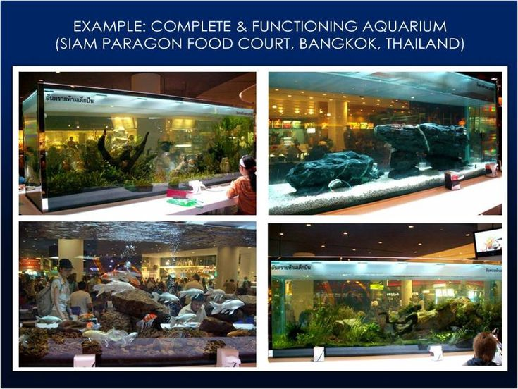 Commercial Aquarium Services