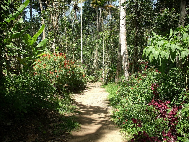 Thekkady - Walking through the spice garden