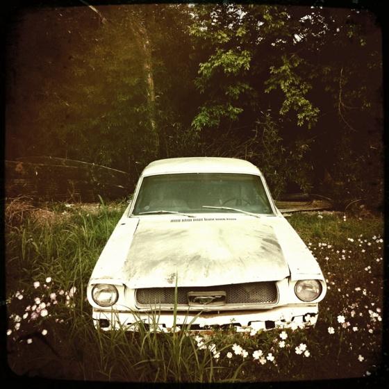 Mustang på grönbete