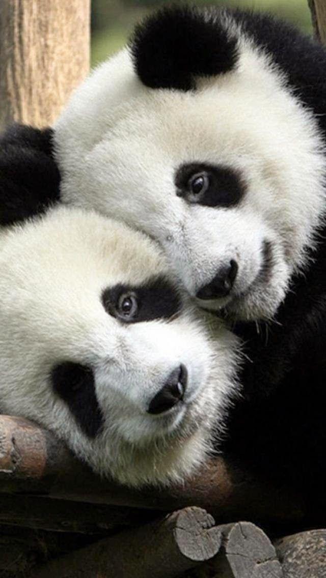 Pandas Loves