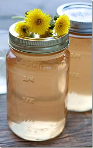 Backyard Foraging: Dandelion Cordial
