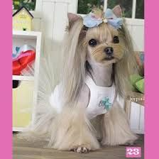 Yorkie Dog Grooming