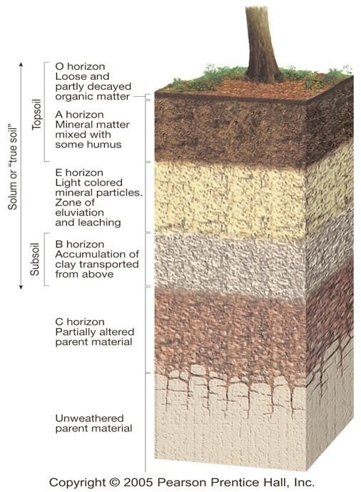 ideal_soil_horizons1335754886563.jpg (506×690)
