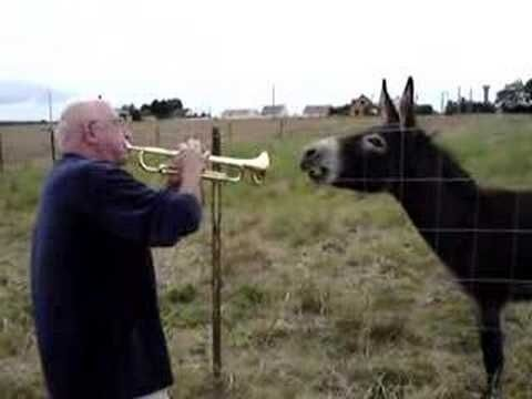 This Donkey's Trumpet Duet Is Everything.  Click on picture to enlarge it and then you can start the video.  It's fun!  God Bless the Donkey!!  His name is Pepe.....