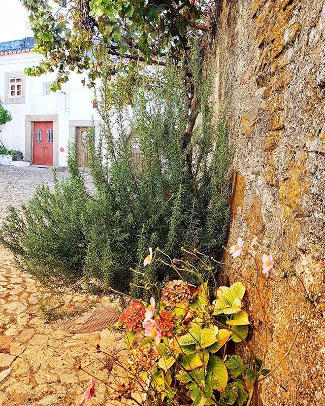 PT: Com esta foto ficam com vontade de visitar Castelo de Vide? EN: With this photo do you feel like visiting Castelo de Vide? . #Alentejo #Portugal