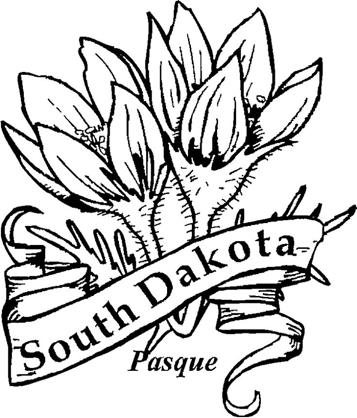 south dakota state flower coloring page pasque flower