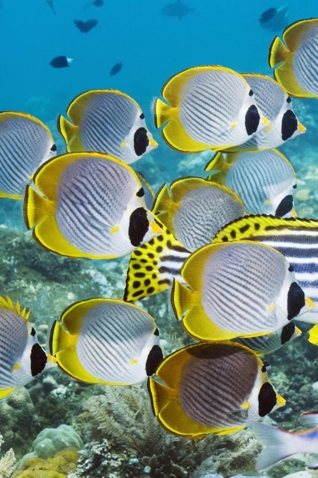underwater, swim, ocean, coral, fish Wallpaper Apple WallpapeprsCraft