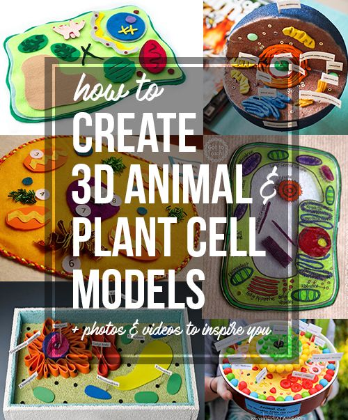 How to Create 3D Plant Cell and Animal Cell Models for Science  - Jak utworzyć 3D Plant Cell i zwierzęce modele komórkowe dla klasy Science Class