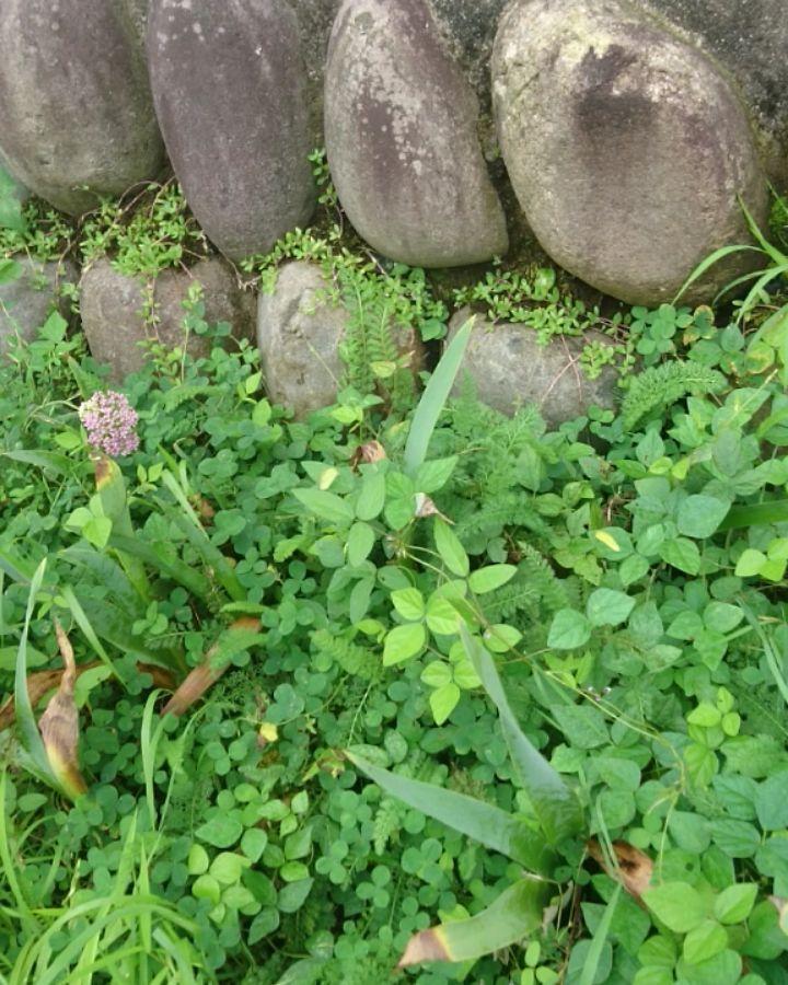 … #establishedin1661#yamakikan #ryokan #kawarayu…
