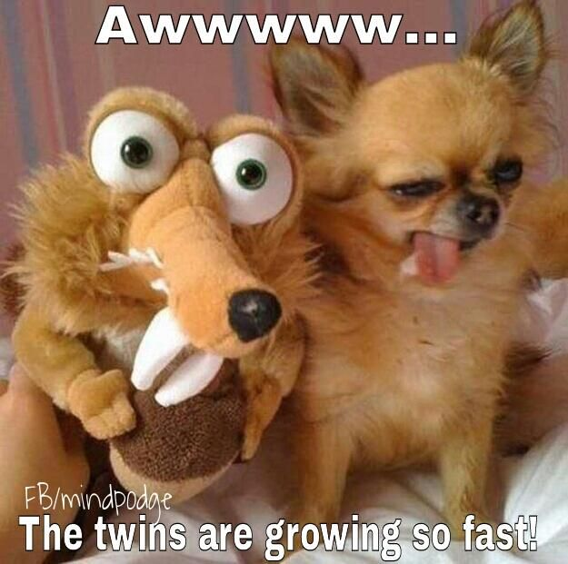 The twins' latest photo...