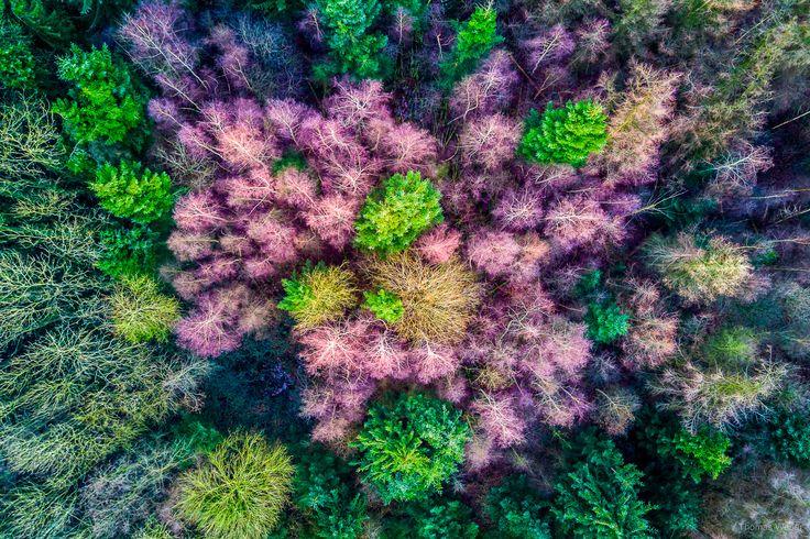 Colorful trees in the forest.   Follow me on Instagram: https://www.instagram.com/phothomas.de/  #tree #colorful #forest #moor #niedersachsen #lowersaxony #germany #dji #mavic #djimavicpro #multicopter #drone #water #flowers #instaflower #goodmood #nature  #photography #phothomas #photographer #oldenburg #rastede #bremen #fotograf #thomasweber