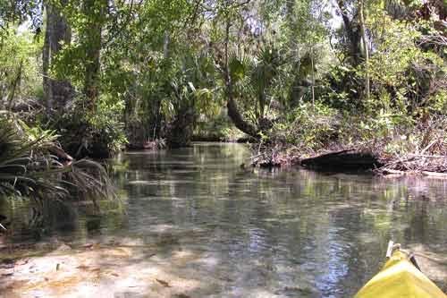 Juniper Creek spring run