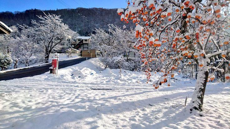 柿にも雪が || 歳時記の郷 奥会津
