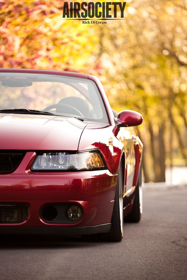 Powering down a freeway on a sunday afternoon in a 2003 ford mustang svt cobra has its advantages not only was philip law able to test the power output of